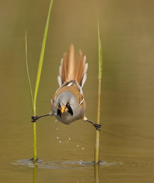 Tit Bird (2)