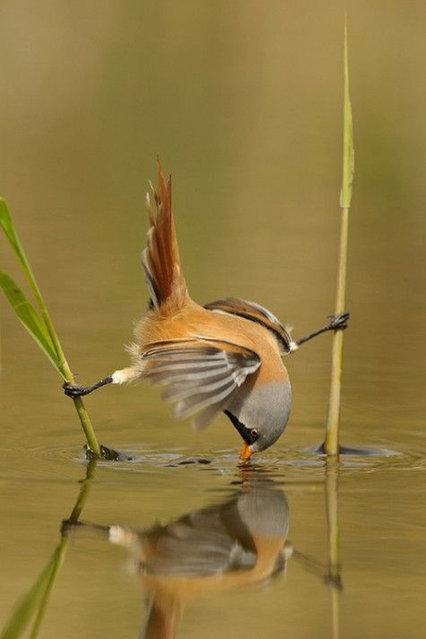 Tit Bird (3)