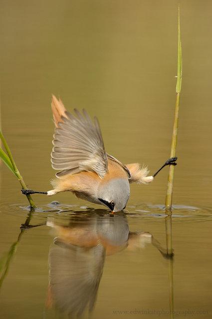 Tit Bird (4)