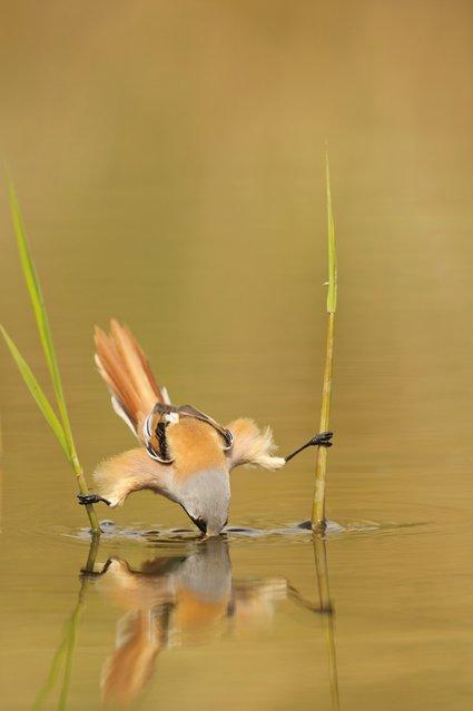 Tit Bird (5)