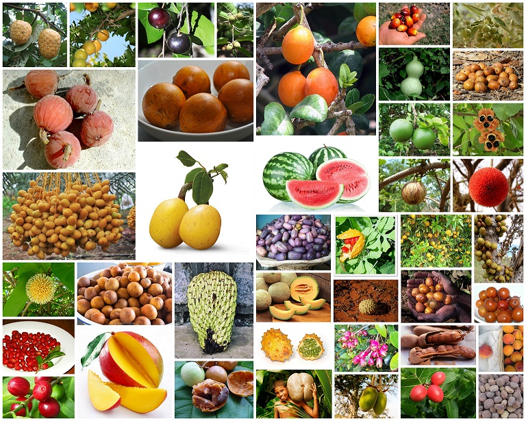 Food We Eat : List of Native Fruits of Africa