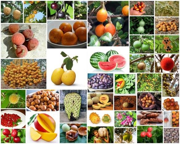 Mbuyu & The Forgoten Fruits – Farm Kenya