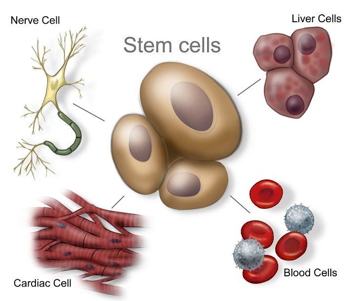 Inspire to Learn : Stem Cell Therapy : Medicine