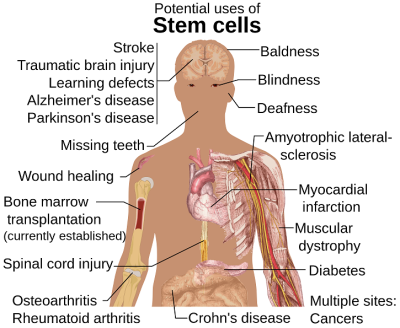 Stem_cell_treatments.svg