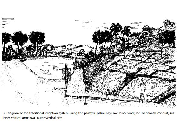 traditional irrigation system palm
