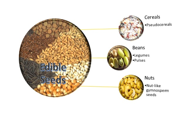 Edible Seeds List