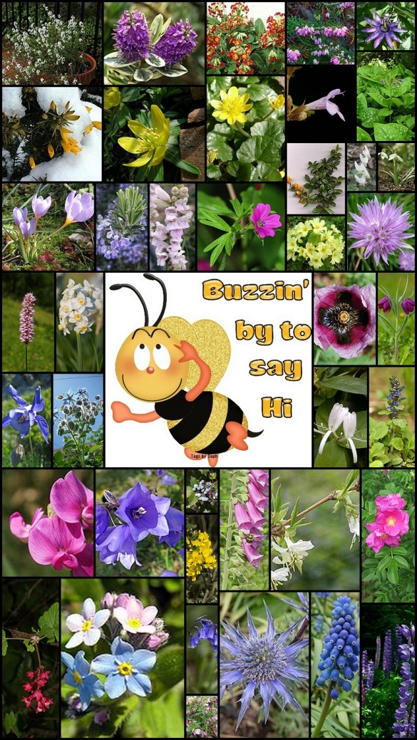Plants for Saving Bees