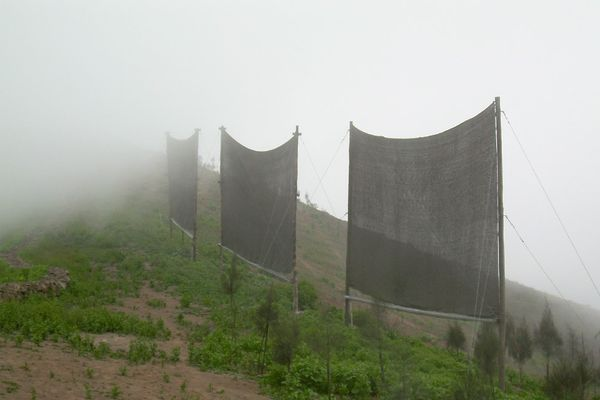 Fog Harvesting