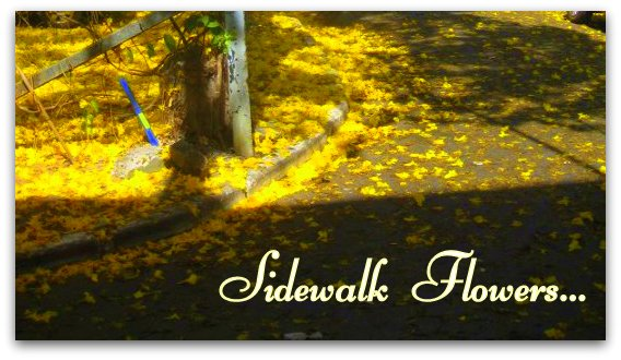 Side Walk flower