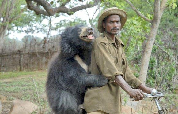 Sloth Bear (2)