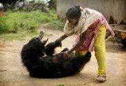 Sloth Bear (5)
