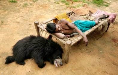 Sloth Bear (6)