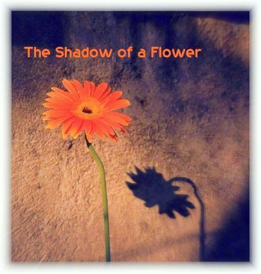 Shadow of a flower