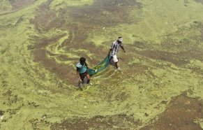 River Pollution in India (9)