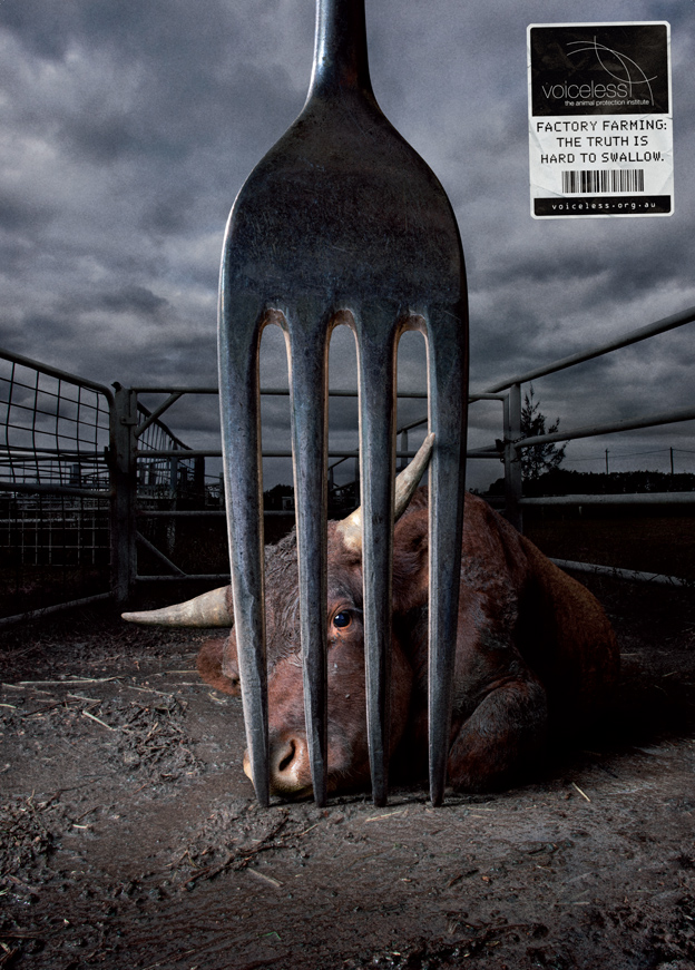 Picture Speaks : Factory Farming