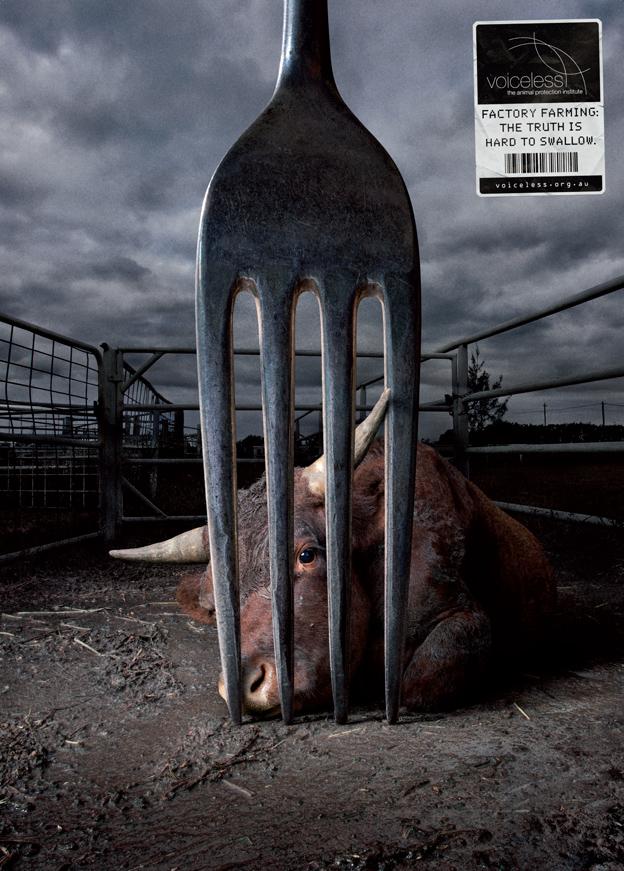 Picture Speaks : Factory Farming