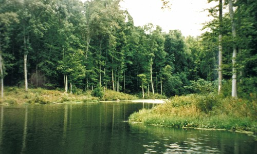 Forest_Buffers_page_image