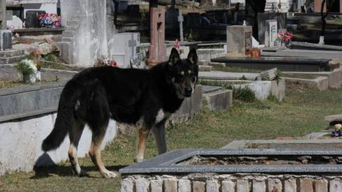 Story : A Dog called Capitán