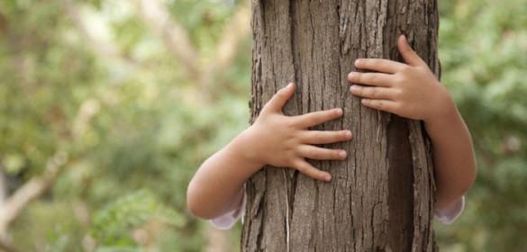 Tree heals