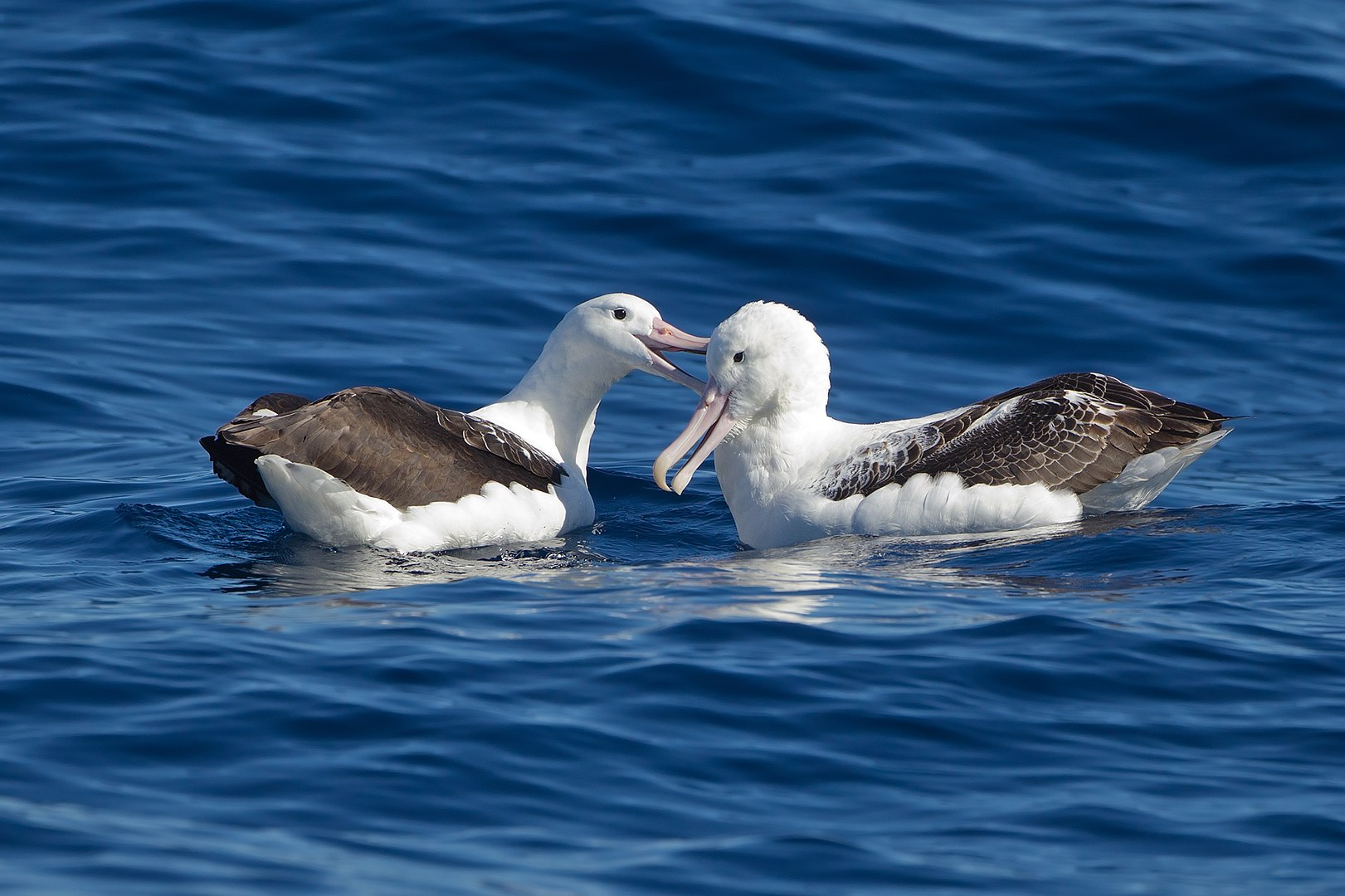 'Earth' Our home too : Albatross